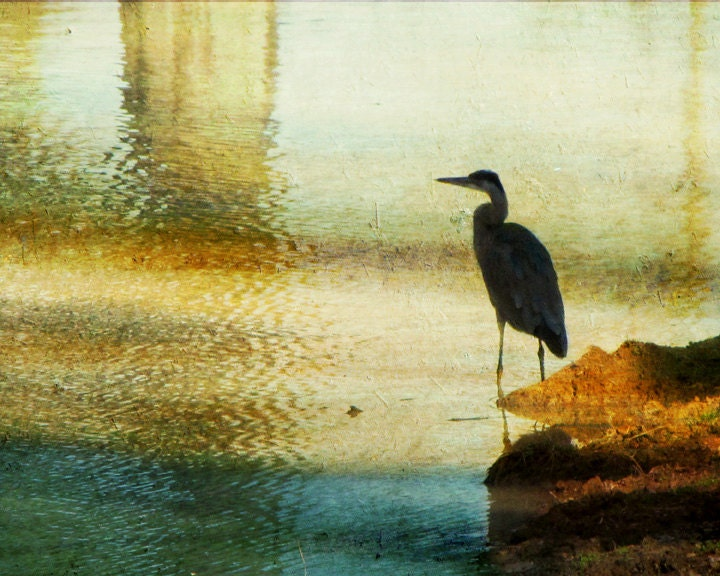 Great Blue Heron Photography, Water Fowl Bird Photography, aqua blue, green, copper, teal wall art, impressionistic water, home decor, 8x10