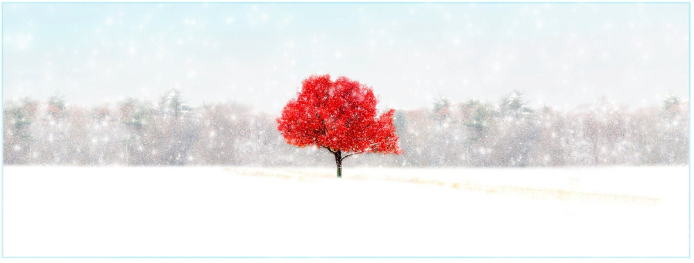 SET OF 4,nature photography, Snow, Autumn, Red, White, Tree serene, peaceful, winter,  Greeting Card Note Card Blank Inside - RikkiVanCamp