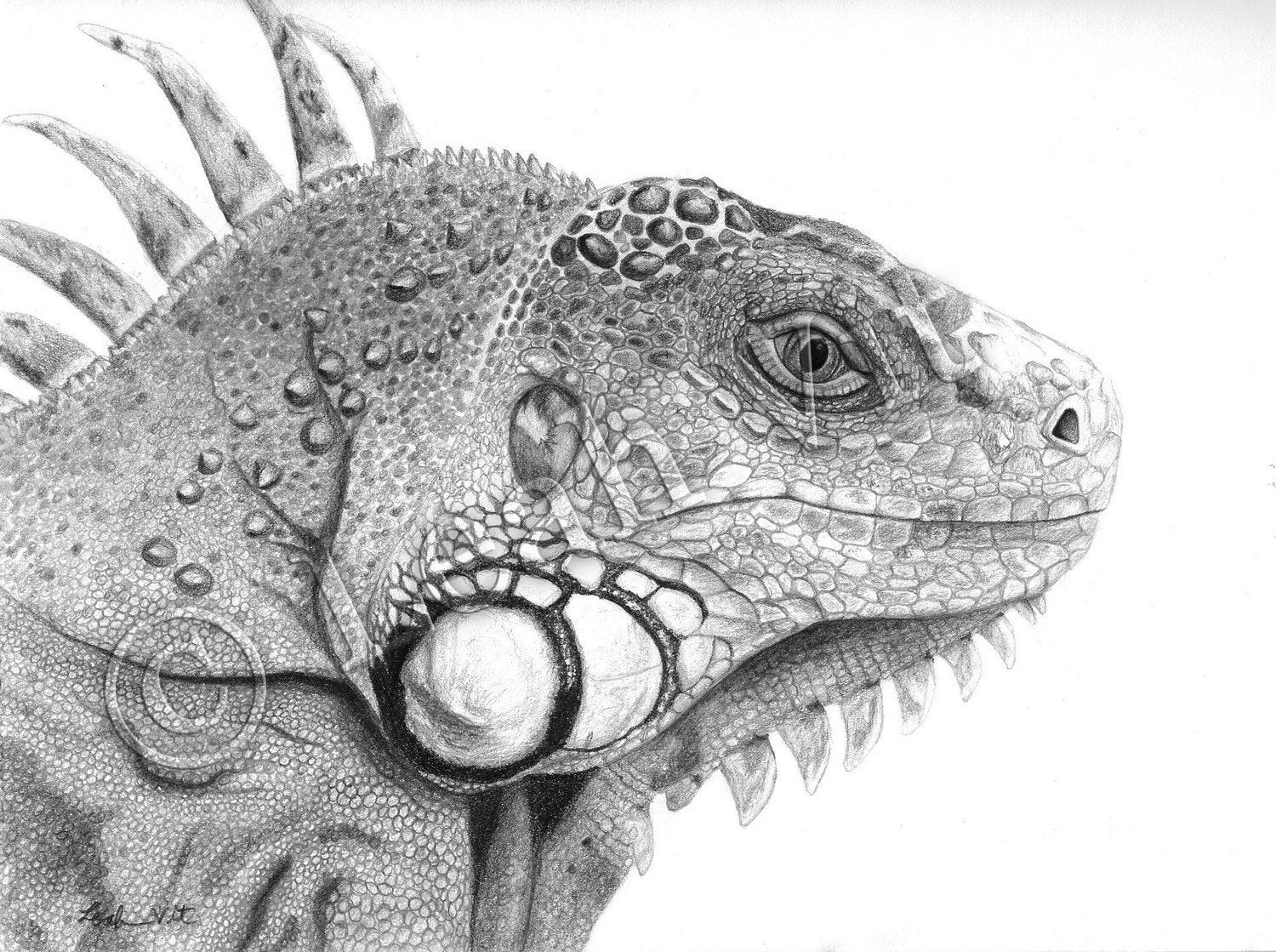 Cute iguana drawing