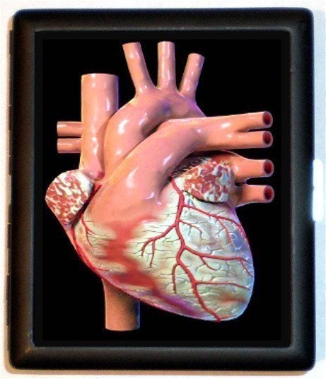 Real human heart images - photo#18