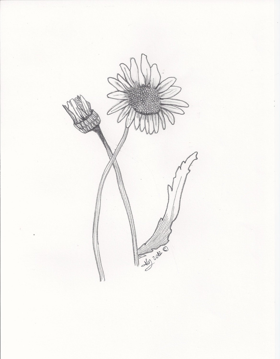 Daisy Flower Print in black and white 5x7 Original Artwork by Reflections of Kayla