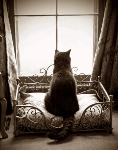 Sepia Tone Kitty Cat Waiting Patiently in the Window Fine Art Photography Photo Print - JWPhoto