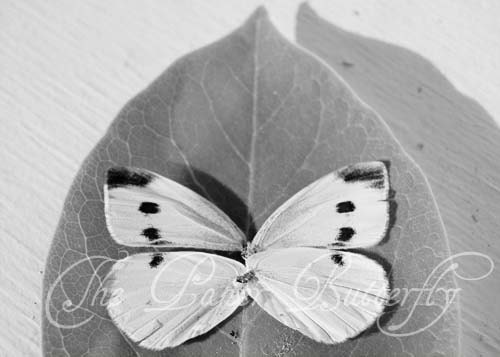 Butterfly Ghost - Still Life Photograph - 5x7 Black and White Nature Print - wing fly spots polka dots grey leaf spirit summer life - ThePaperButterfly