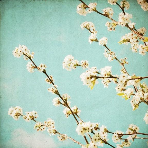 The Sweet Life - white spring blossom photo, shabby chic decor, aqua, rustic decor, wall art, square flower photograph - SusannahTucker