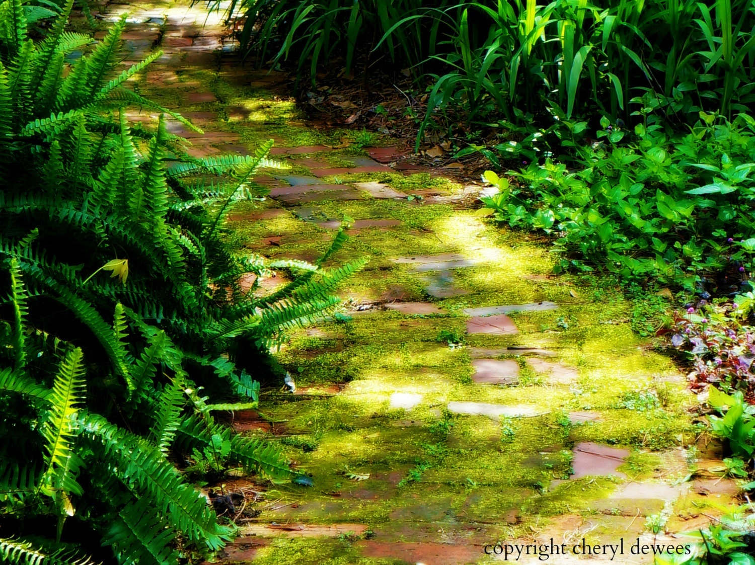 Sunny Path/Fine Art Photo Print/Photography/Moss/Green/Nature/Fern/Garden - PointofViewCreations