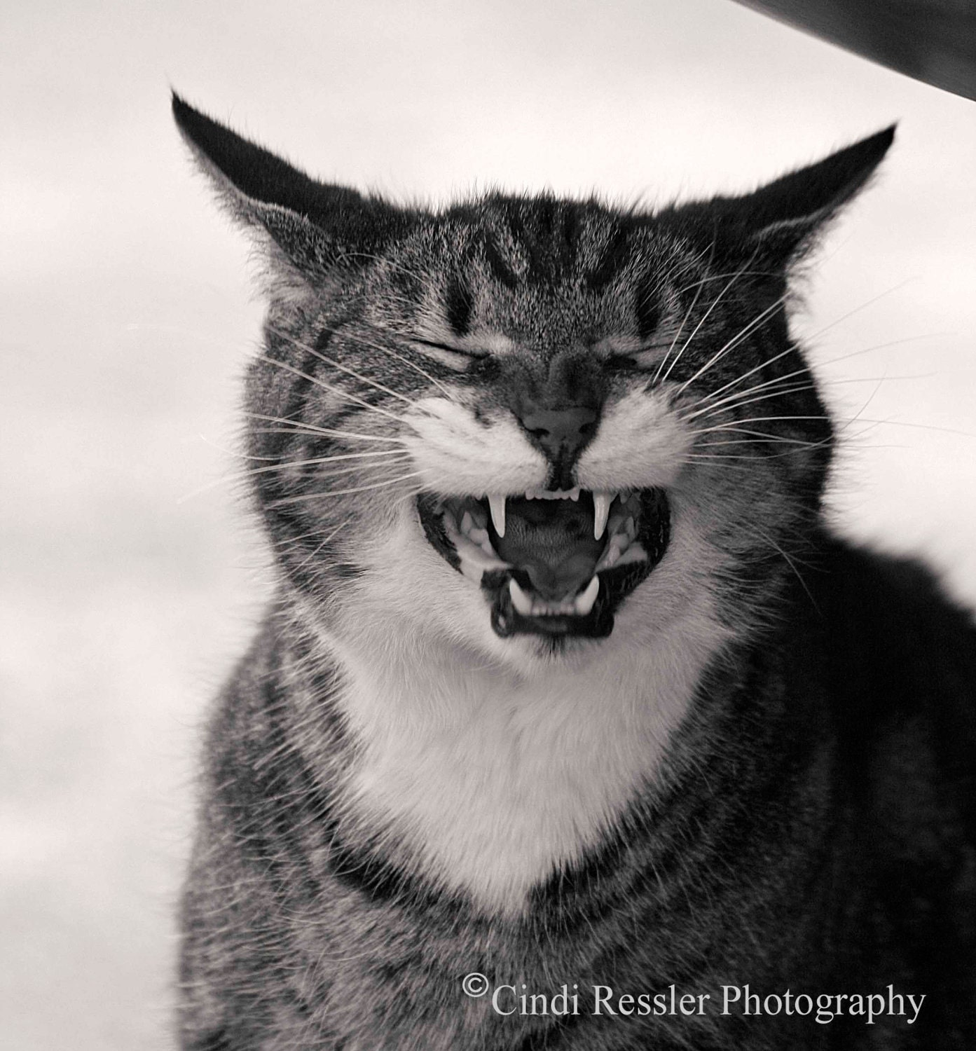Jake the Cat, 5x5 Fine Art Photography, Cat Portrait, Black and White Photography, Charity item - CindiRessler