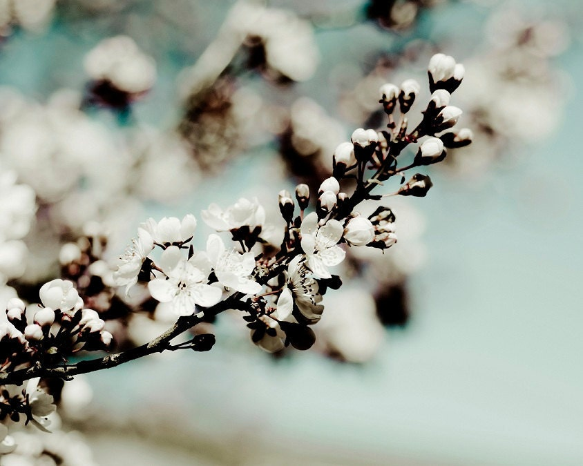 """french country robin's egg blue baby blue shabby chic home decor spring garden lover flower photography under 25 """"A Moment Awaits"""" - AmandaRaeK"""