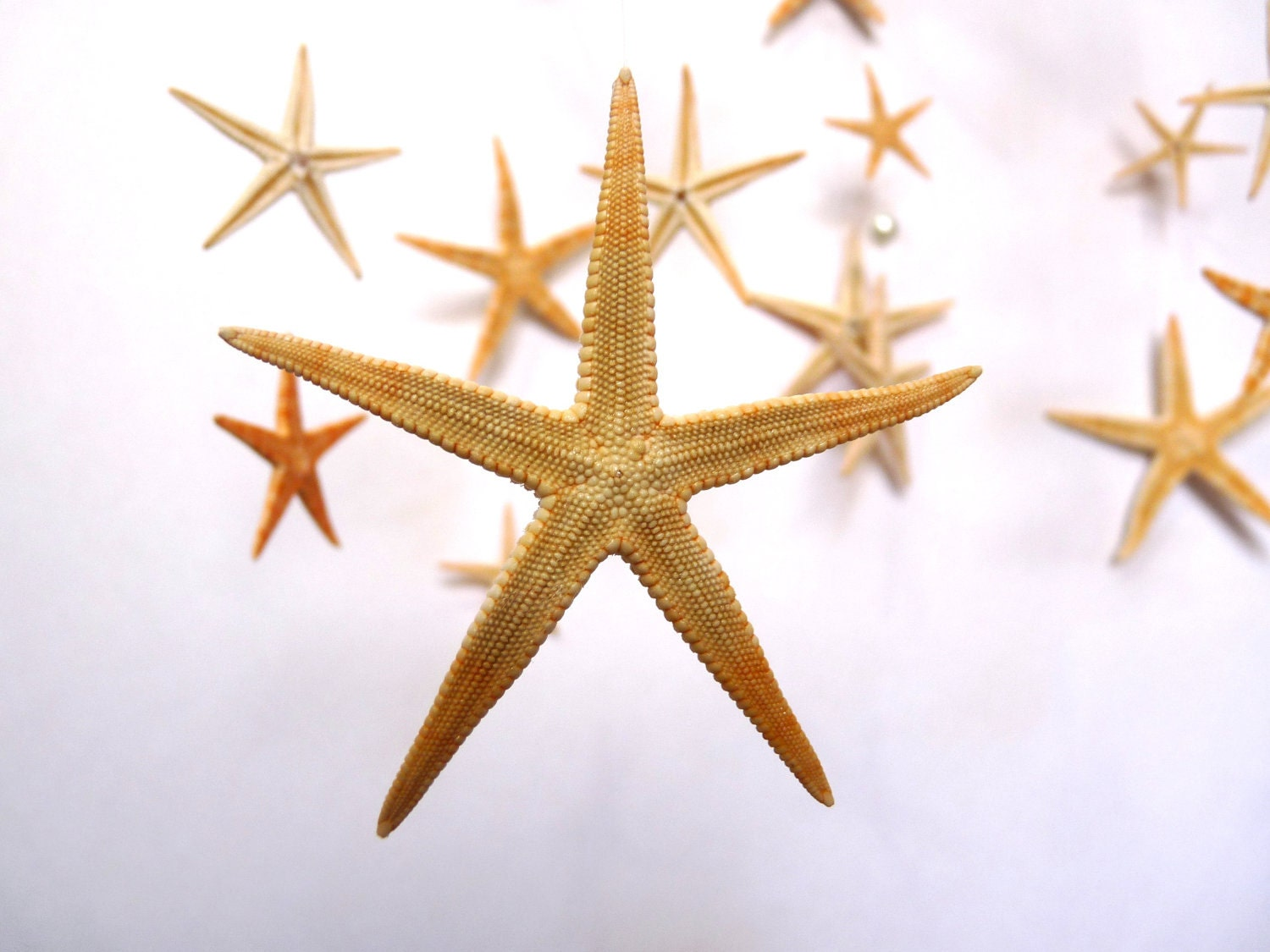 Sea Stars and Pearls mobile/hanging decoration/ocean,sea(baby-neutral-boy, girl)Wedding, party decoration - FactoryOfIdeas
