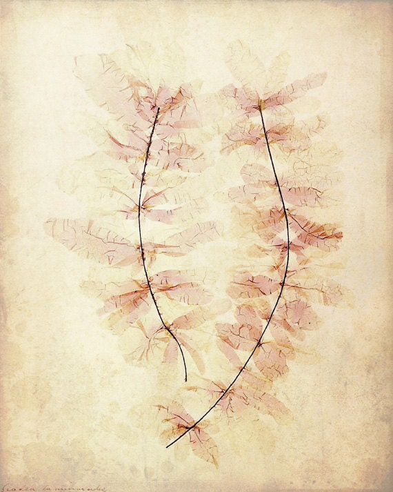 "Antique Botanical Print ""Ghost Leaves"" Victorian Floral Pressed Flowers - Vintage Woodland - Pink Sepia Leaves - missquitecontrary"