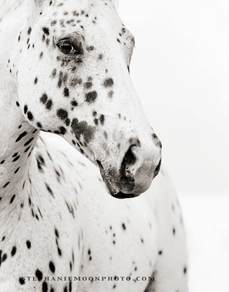 black white photos black and white horse photography. Black Bedroom Furniture Sets. Home Design Ideas