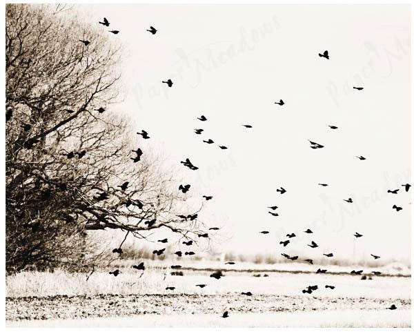 ANNIVERSARY SALE Sky Birds Flock Tree Print Minimalistic Download 8 x 10 inch Printable Photo - PaperMeadows