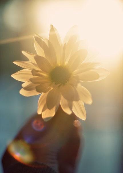Драматические фотографии природы - поймать солнце фотографии 5x7 - золотисто-желтый цветок закат фото