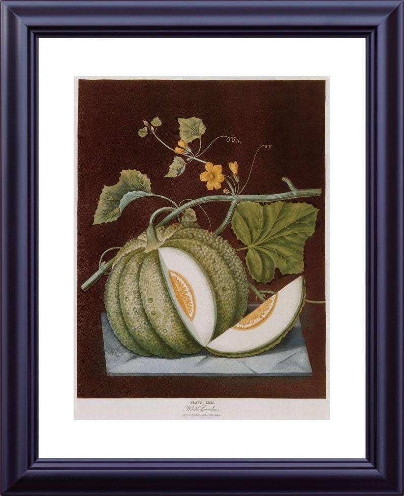 BOTANICAL Print 11x14 Large Vintage Kitchen By