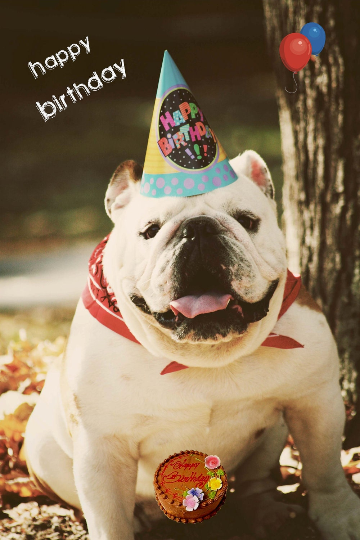 5x7 English Bulldog Happy Birthday Card By Snowy4052002 On