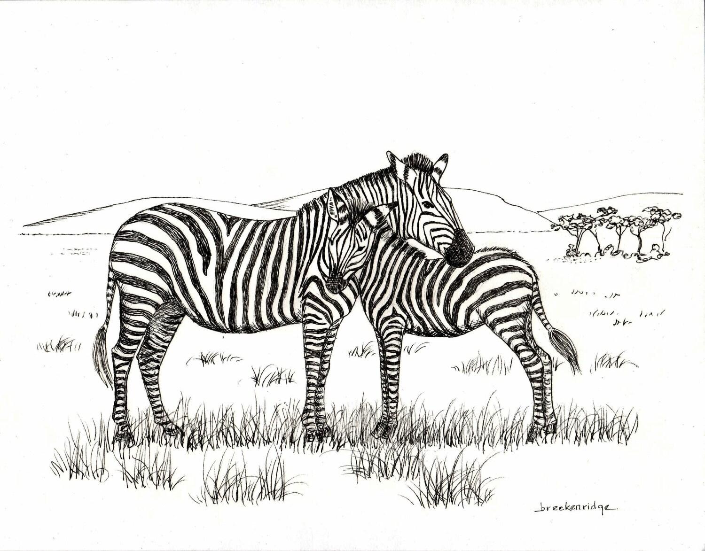 Zebra drawing for kids