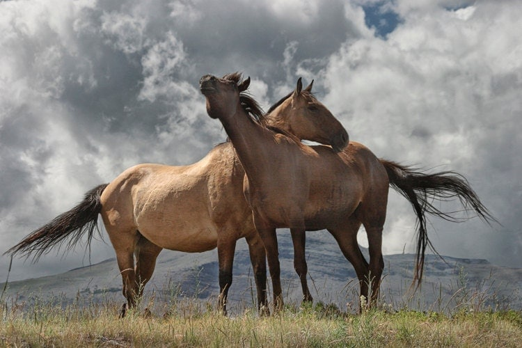 Montana Horses - A Fine Art Photograph - RandyNyhofPhotos