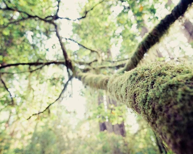 Mossy Tree Photograph, Woodland Forest Home Decor, Spooky, Mysterious, Green Wall Decor, 8x10 - BreeMadden