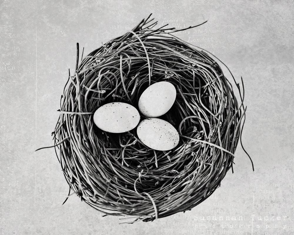 Nest - 8x10 black and white photograph -wall art, eggs, nest, kitchen decor, rustic country decor,  minimalist - SusannahTucker
