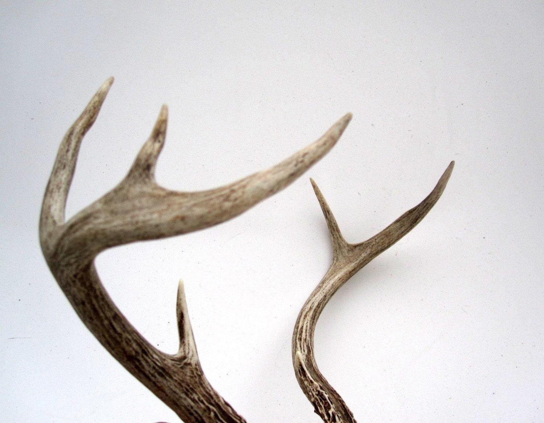 Real Deer Antlers - Rustic Woodland Cabin Decor - LoveButlerVintage
