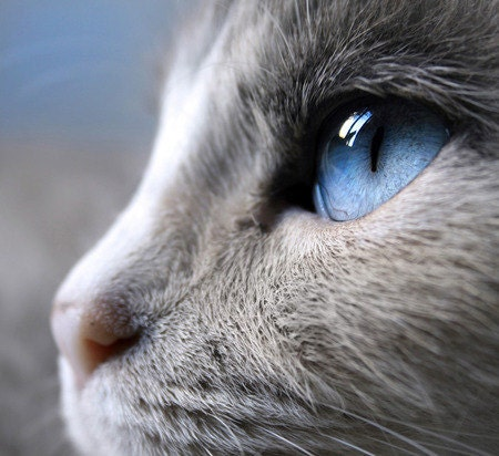 Blue Eyes 11x14 Original Fine Art Photograph