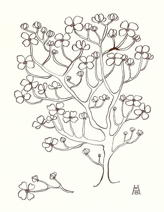 graphic about Legend of the Dogwood Tree Printable known as Dogwood tree coloring webpages