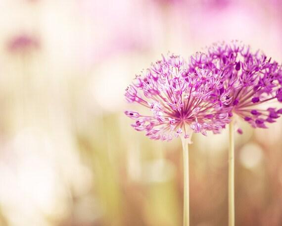 Flower Photography pink decor floral purple by CarolynCochrane