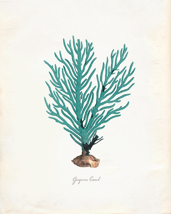 Vintage Green Sage Sea Coral on Antique Ephemera Print 8x10 P275 - OrangeTail