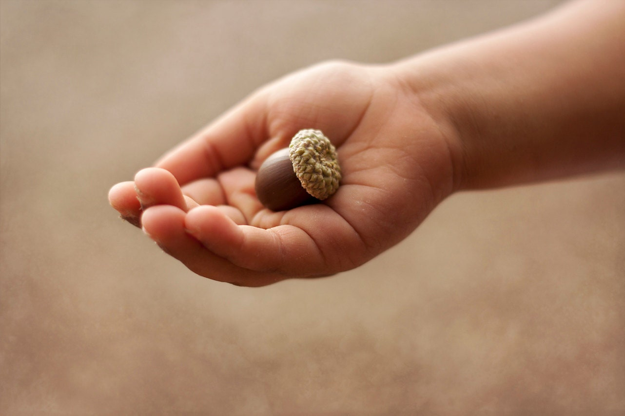 possibility, acorn, hand, childrens wall art, nursery decor, brown, neutral, 8 x 10 photograph, home decor - alifethroughthelens