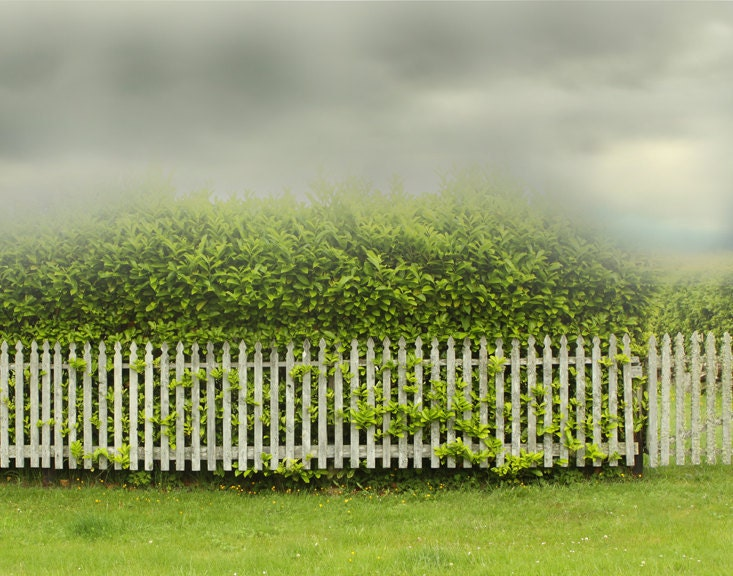 Photography  Landscape Photograph of White Fence and Chartreuse Hedge Storm - lucysnowephotography