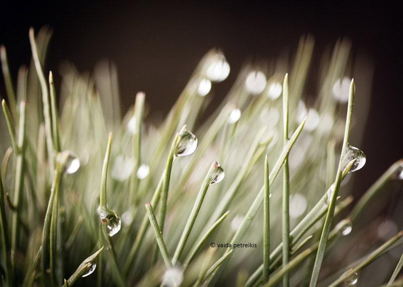 Nature Touches - 5x7 inches Fine Art Photograph - Original Signed Photo - Rain Drops in Nature - VaidaPhoto