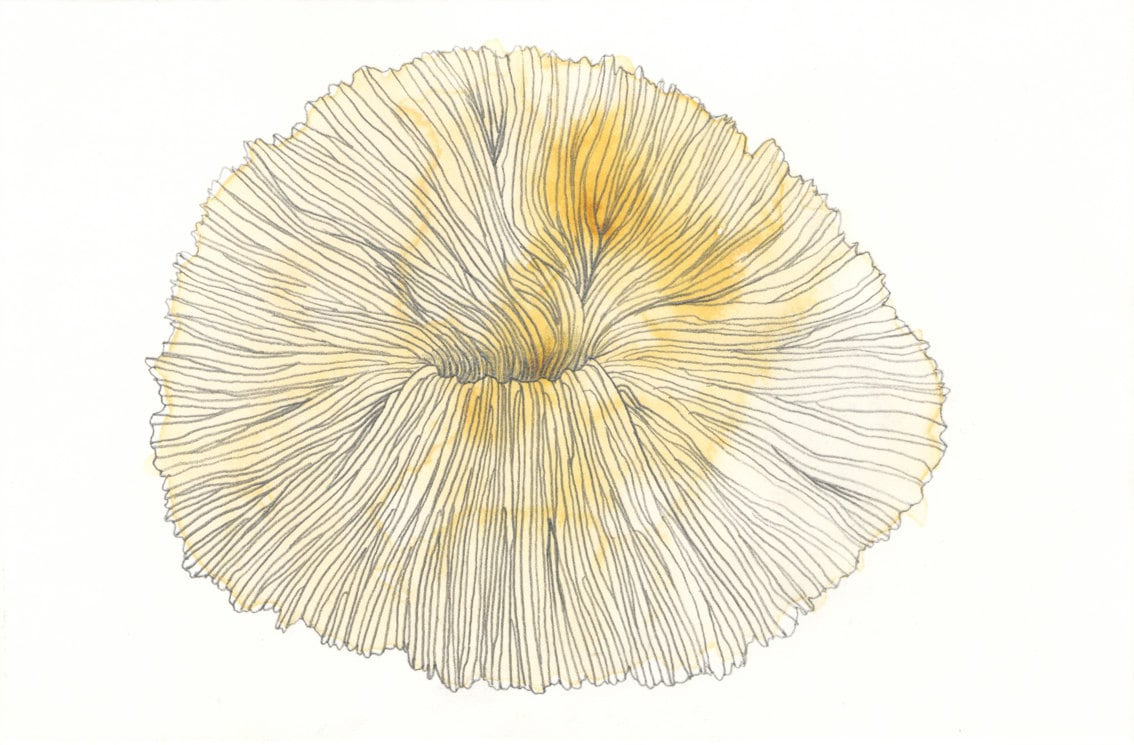 Original Color Drawing - Mushroom Coral - postcard size - AIOUEden