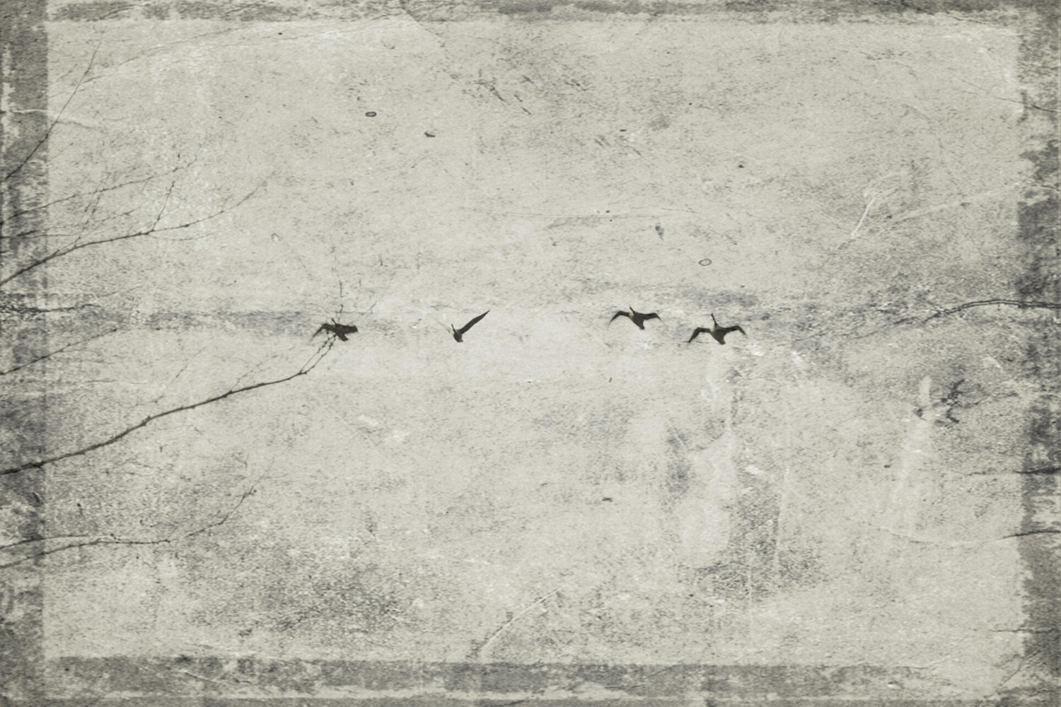 Photo Print - Flying Geese, Black and White, Textured - CapeCodPhoto