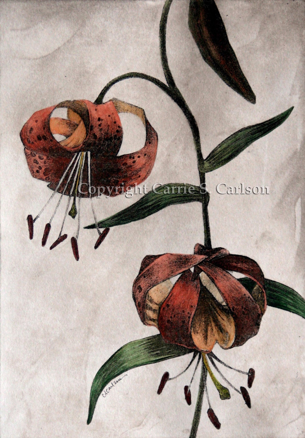 Tiger Lilies - print of original hand-colored solarplate etching 8x10 - CarrieCarlson