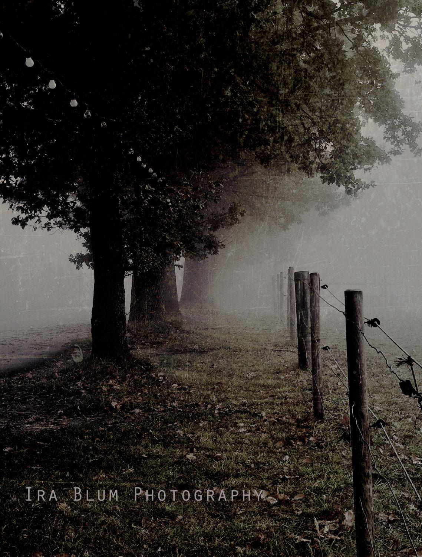 "Dreamy Autumn Fall Fog // Fine Art Photography // Vintage Sepia Green Brown 13"" X 18"" - IraBlumPhotography"