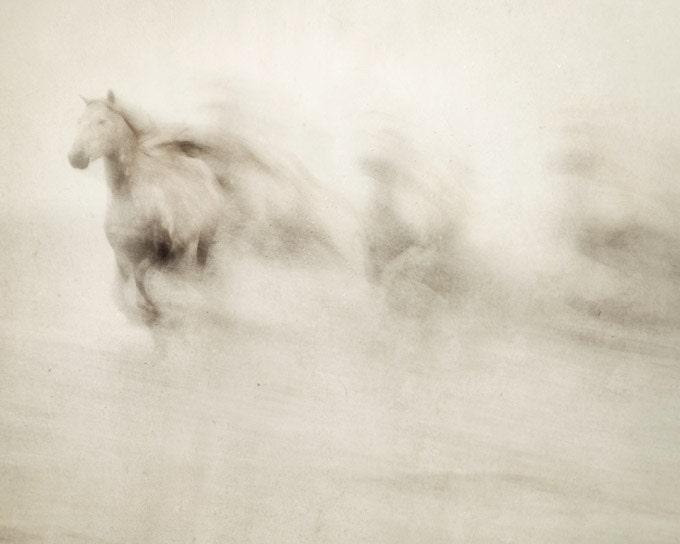 Фотографии природы, абстрактные Фотография лошади, белые лошади бег, Haunting, Ethereal, Камарг - Призраки среди нас