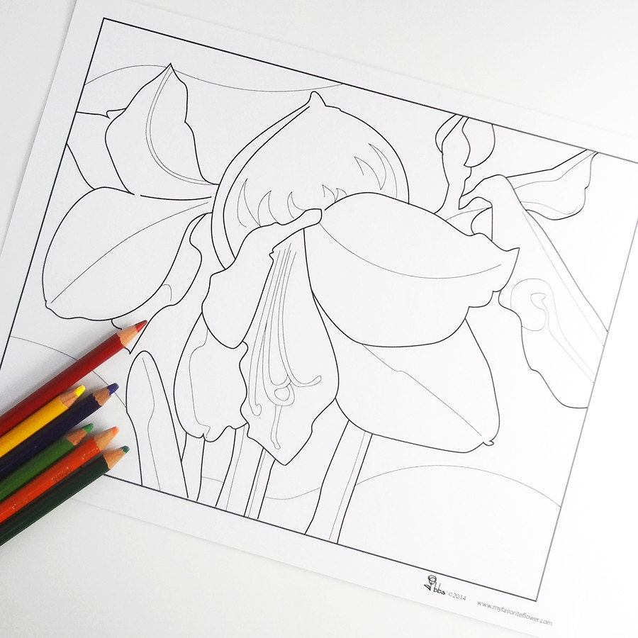 amaryllis coloring pages - photo#20