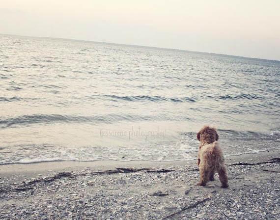 Dog at the Beach Dreamy Blue Gray Dog Photography Print - Jefferson and the Sea - Gray Seashore Pet Dog Photo (8x10) - JessaMaePhoto