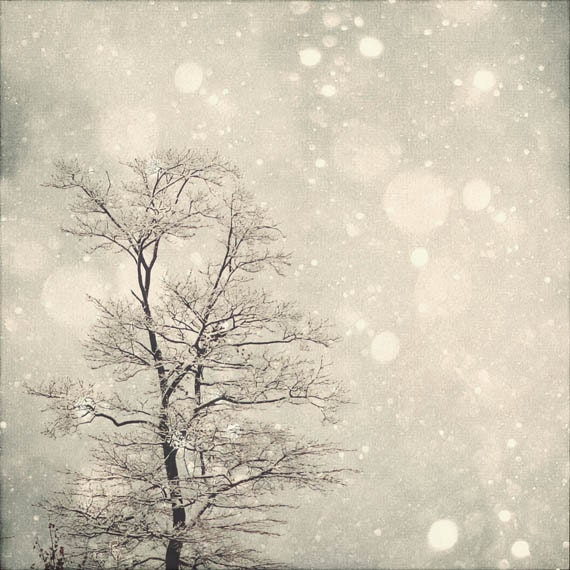 Winter Art: First Snow 8x8 Fine Art Photography, Snow Bokeh, Tree Wall Art, Nature Wall Art, Nature Photography - MarianneLoMonaco