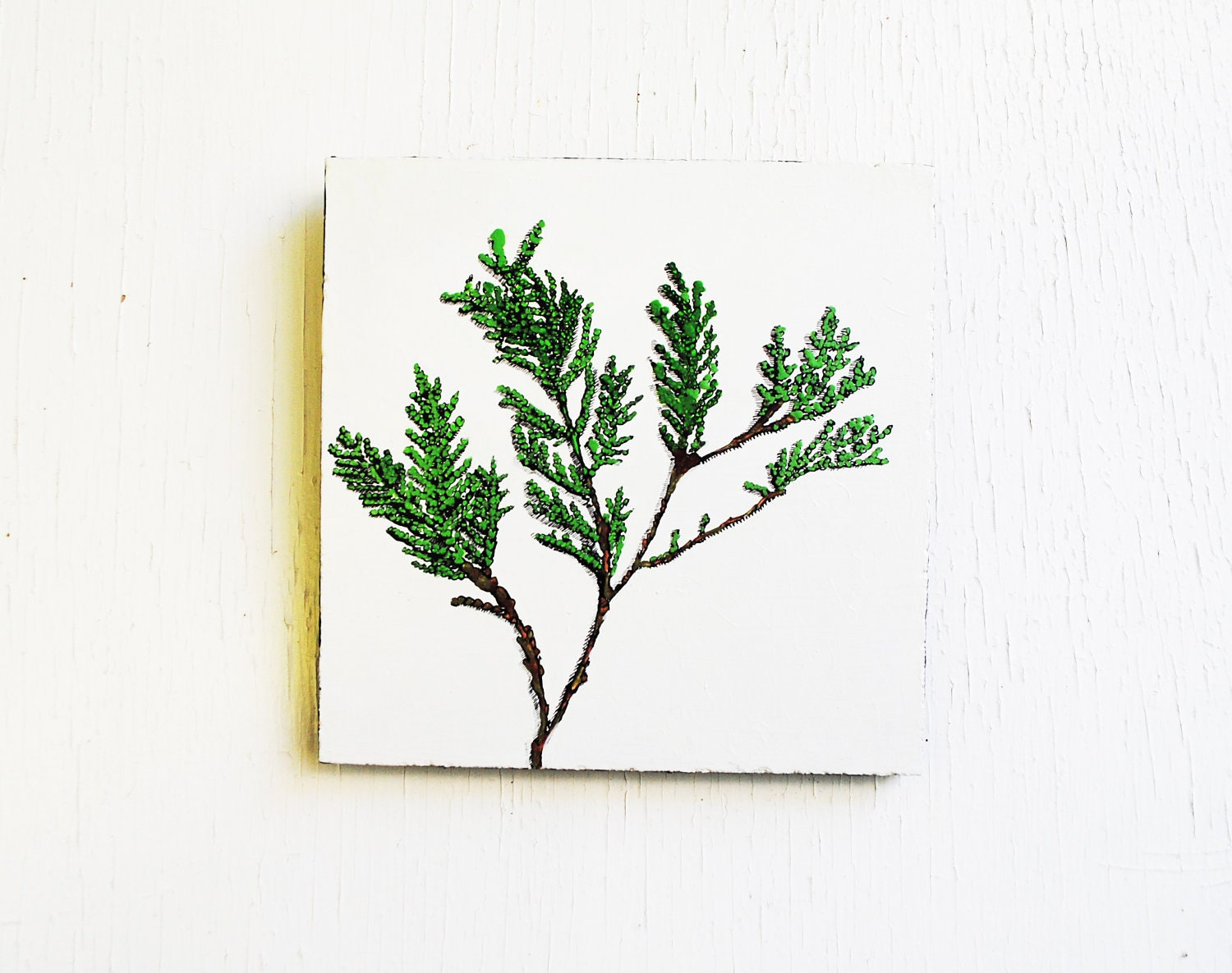 Cedar Branch.  Botanical Painting.  6x6 Nature Symbols.  Winter.  Evergreen.  Original Art.  Home Decor. - SorchaMoon