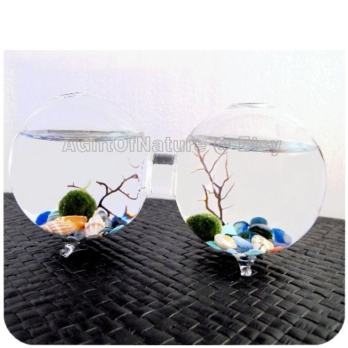 MARIMO MOSS BALLS Terrarium, Japanese Marimo Moss Ball 2-Globe Attached / Double Glass Aquarium, Sea Coral Decor Wedding Birthday Gift - AGiftofNature