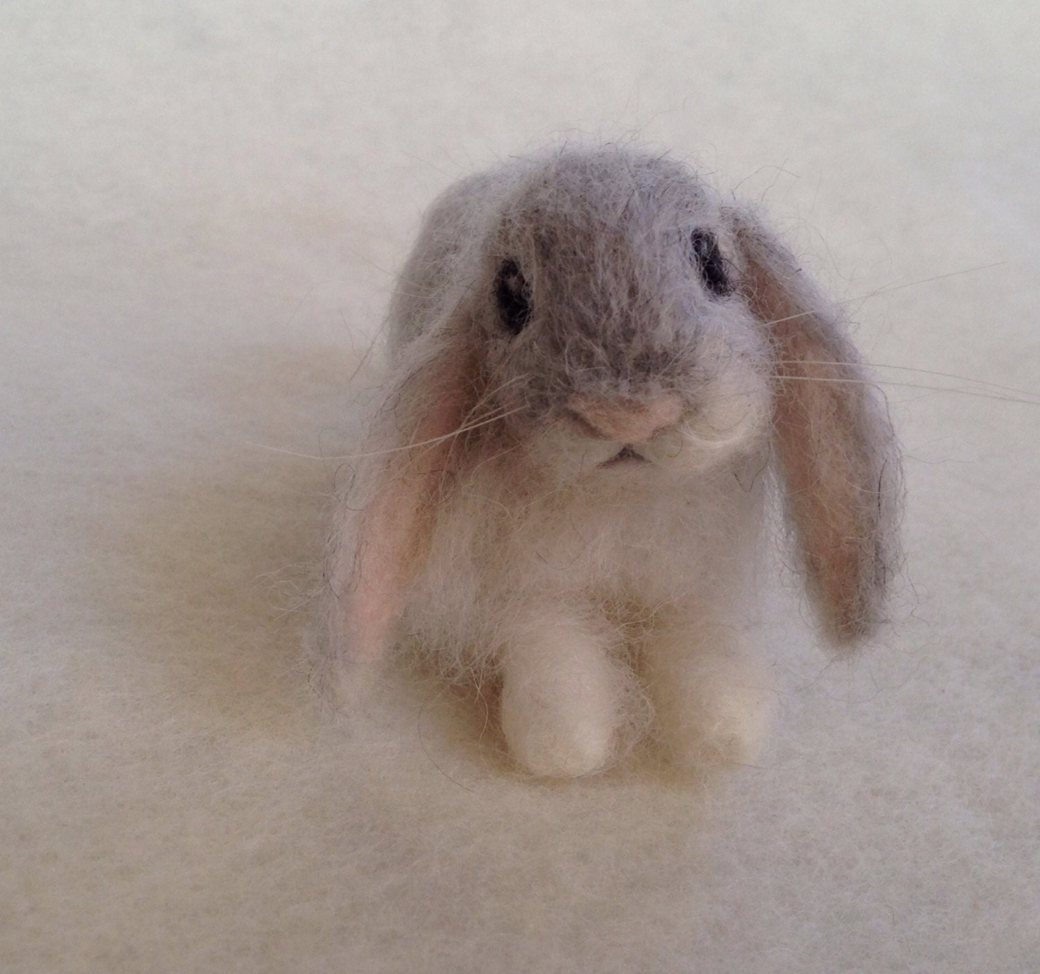 Baby lop eared rabbit - photo#10