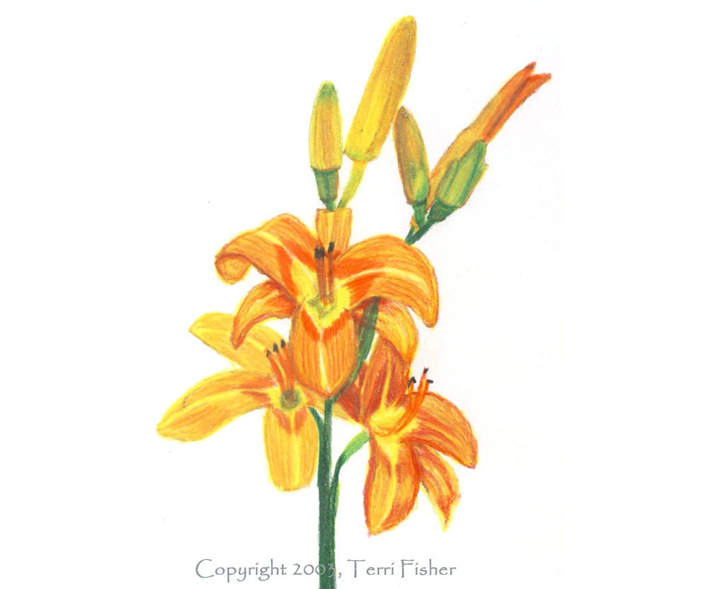Orange and Yellow Tiger Lily Flower Card, Colored Pencil Drawing Note Card, spring garden lover, summer greeting card - SmilingCatStudio