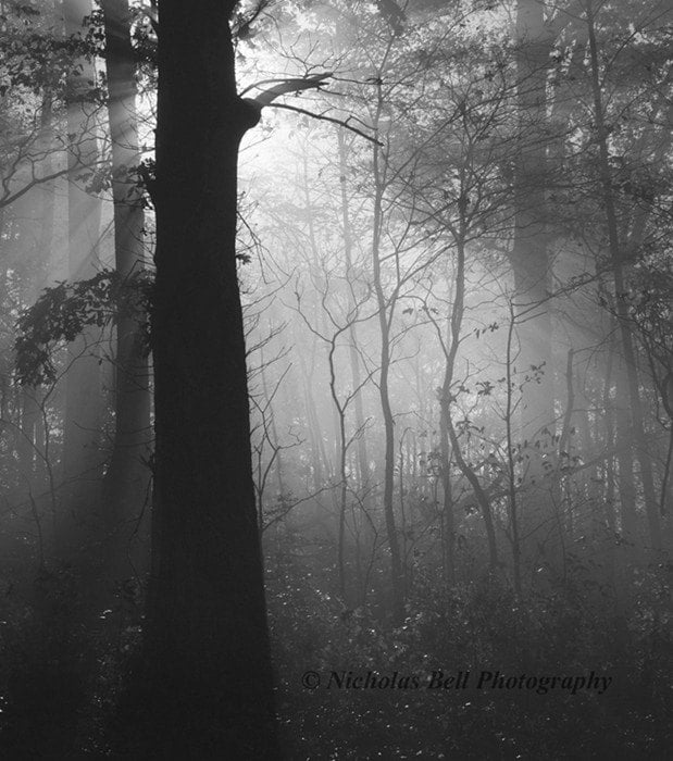 black and white photographs / fog / foggy / forest / trees / Forest Light / 8 x 10 print - NicholasBellPhoto
