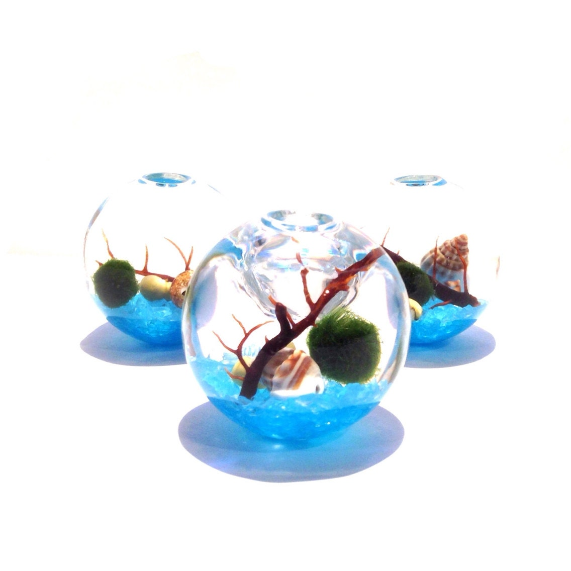Marimo Terrarium Cul-De-Sac of the Blue Ice Sea  - LivingZenArt