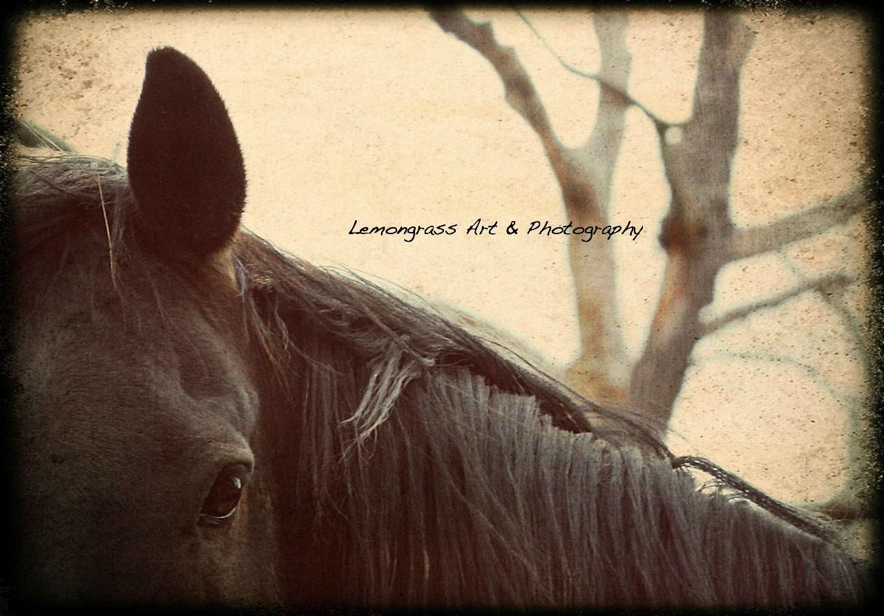 Smokey Brown Horse Fine Art Print 7 x 10 - LemongrassArt