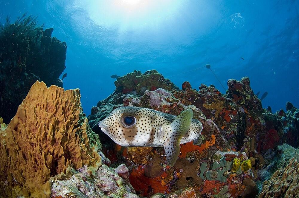 Tropical Fish A... Underwater Fish Scene