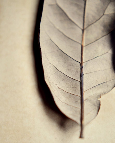 Minimalist leaf photograph- cream, botanical, neutral colors, earth tones, rustic,  muted, fine art photography, 8x10 print