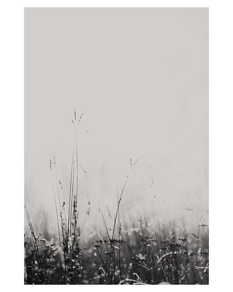 winter fog grass dew black and white photo print - whimsical fine art nature photography, cold, bokeh, shimmer, silver, field, peaceful - oohprettyshiny
