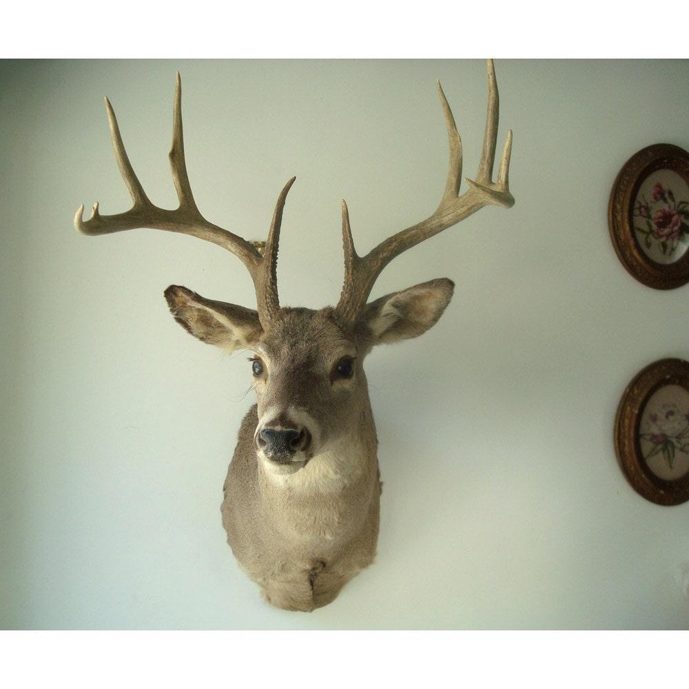 10 Point Mounted Deer Head Vintage Hunting by JustSmashingDarling