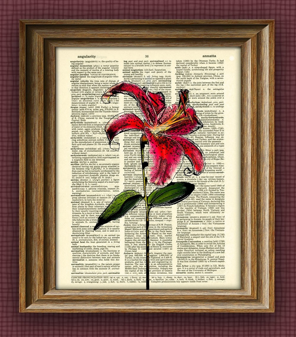 STARFIRE LILY Flower botanical illustration beautifully upcycled dictionary page book art print